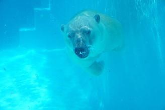 靜岡小療癒  #靜岡 #日本平動物園