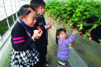 小山市 草莓之里 採草莓