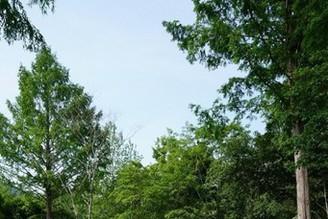 上三依水生植物園 親近大自然
