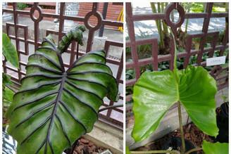 園藝界最夯的雨林植物亮相 士林官邸雨林植物展開鑼!