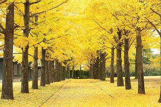 日本不只有楓紅 日本茨城初秋の三大美色